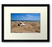 Seashell Splendor 2 Framed Print