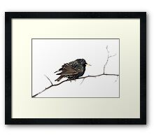 Hello Starling Framed Print