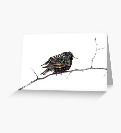 Hello Starling Greeting Card