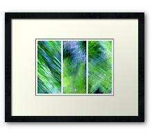 Daucus carota Framed Print