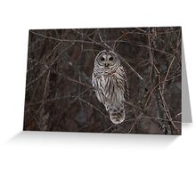 Barred Owl - Kanata, Ont Greeting Card