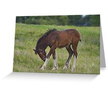 Foal - Cotebrook Shire Horse Centre Greeting Card
