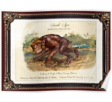 Skunk Ape. Poster