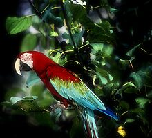Pretty Bird by Kathy Nairn