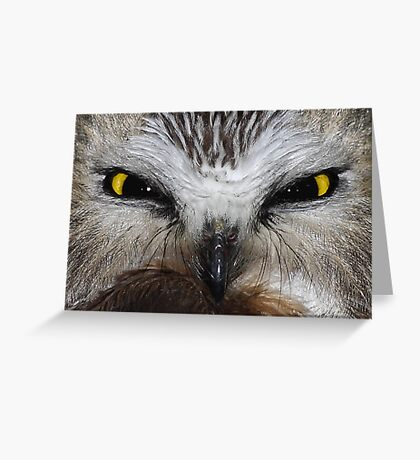 Saw-whet Owl...Saw-eeet! Greeting Card