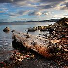 driftwood by Bill vander Sluys