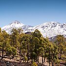 Looking Up to El Teide by Kasia-D
