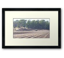 farmland and animals Framed Print