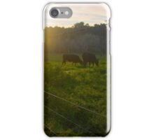 Cows in a Paddock A iPhone Case/Skin