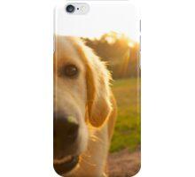 Golden Retriever A iPhone Case/Skin