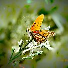 Brighten My Day by Pat Moore