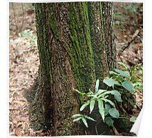 Mossy Tree, Fogg Dam Poster
