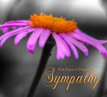 Prayers and Sympathy Purple Orange Coneflower by Shelley Neff