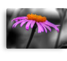 Lovely Purple and Orange Coneflower Echinacea Canvas Print