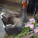 White-fronted Goose & Buttercups  by Penny Odom