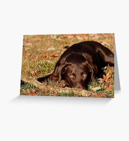 MY STICK CHASER Greeting Card