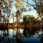 Red Gums over the Billabong Barmah Forest Vic by Jeff Barnard