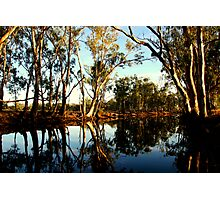 Red Gums over the Billabong Barmah Forest Vic Photographic Print
