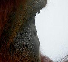profile by robertagiovedi