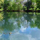 Cibolo Creek  by Penny Odom