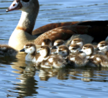 EGYPTIAN GOOSE AND TEN CHICKS Sticker