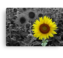 The Sun Is Shining Canvas Print