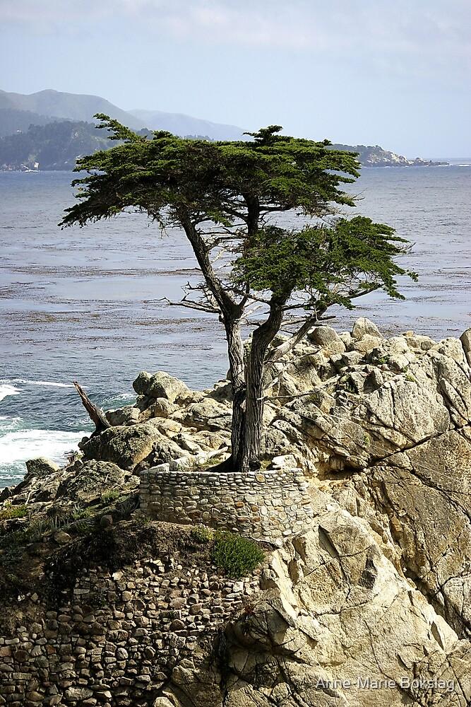 Lone Cypress by Anne-Marie Bokslag