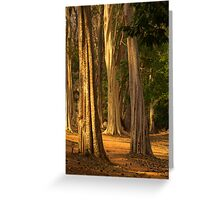 Forest near Siem Reap, Cambodia Greeting Card