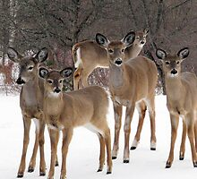 waiting for the goods... 22 in my yard this morning by Gerry Myers