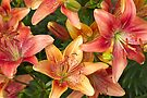 Lilies In Orange Red And Yellow  by Sandra Foster