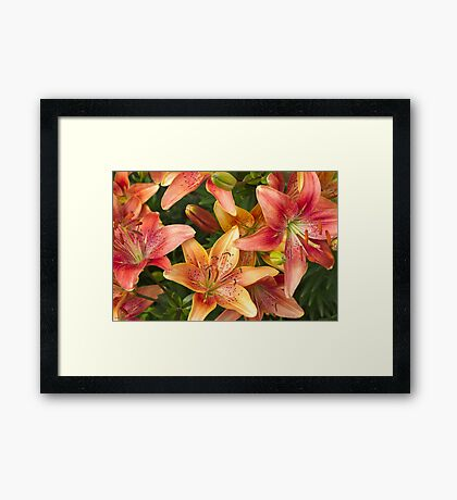 Lilies In Orange Red And Yellow  Framed Print
