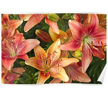 Lilies In Orange Red And Yellow  Poster