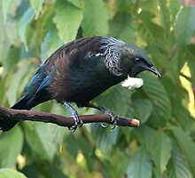 Tui.....the Monarch surveys his kingdom.....! by Roy  Massicks