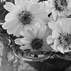 A Serving Of Daisies  by Sandra Foster