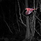Free as a Bird by MichelleR