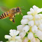 Bee in flight 2 by Tony Wong