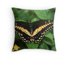 Eastern Black Swallowtail Butterfly with Open Wings Throw Pillow