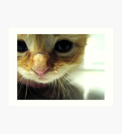 Tiny Kitty Needs A Home Art Print