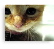 Tiny Kitty Needs A Home Canvas Print