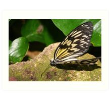 Paper Kite Butterfly with Open Wings Art Print