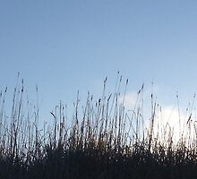Waving Grass, Blue Skies by PolarCat