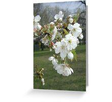 Beautiful Blooms Greeting Card
