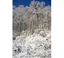 Winter's Lace Photographic Print