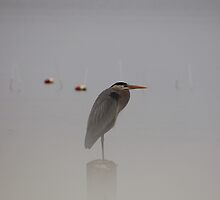 Great Blue Visitor by Angel Perry