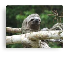 3 Toed Sloth Canvas Print