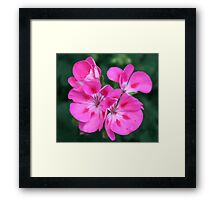 Showy Blossoms Framed Print