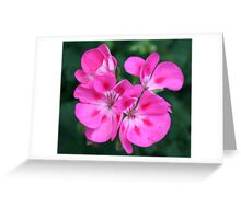 Showy Blossoms Greeting Card