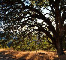 Oak in the Summer by LadyEloise