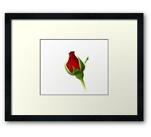 Red Rosebud Opening Framed Print