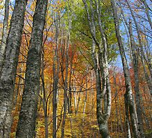Autumn bliss by Forrest Tainio